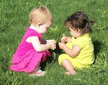 two toddlers playing with a dandelion while sitting in the grass